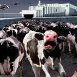 cows_dees