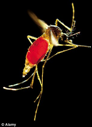 Inside the mosquito factory: Can malaria be stopped by British-bred genetically modified mosquitoes?