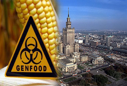 Poland Announces Complete Ban on Monsanto's Genetically Modified Maize