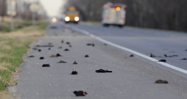 Dead birds plummet from sky over I-95; latest harbinger of doom?
