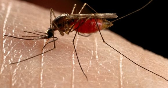 Florida Keys residents resist release of dengue fever-immune mosquitoes