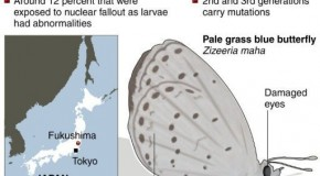 Fukushima 'caused mutant butterflies'