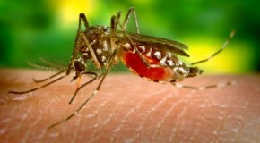 "West Nile Virus ""Outbreak"" Justifies Spraying Toxic Chemicals onto Citizens"