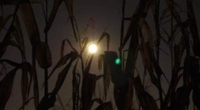Why Are We Being Kept in the Dark Over GMOs?