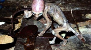 Alien Origin? Captured Creature Still A Mystery?