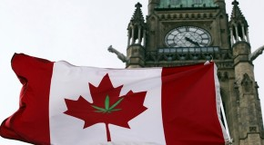 Marijuana legalization or decriminalization backed by most Canadians: poll