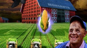 "Taking Over for Monsanto, DuPont Hunts Down Farmers for Violating the ""Intellectual Property"" of GMO Seeds"