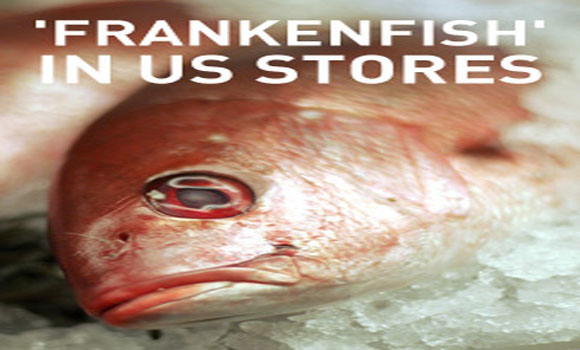 Genetically modified frankenfish to appear in US stores