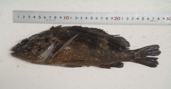 Fish caught near crippled Japanese N-plant with 2,500 times the legal limit of radioactivity for human consumption