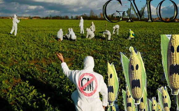 Genetic Engineering and the GMO Industry Corporate Hijacking of Food and Agriculture