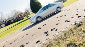 MASS BIRD DIE-OFF: Up to 300 Birds Mysteriously Fall From The Sky In Seymour, Tennessee?!