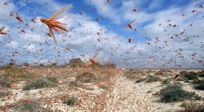 Population Control Advocacy Group: Humans Equal Locusts