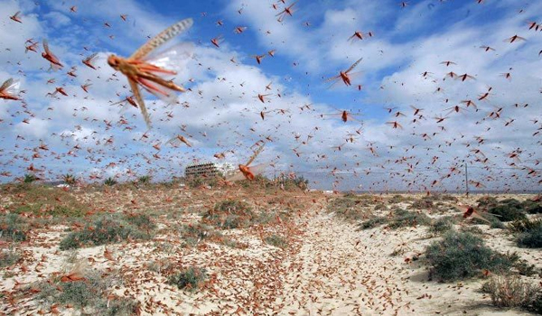 Population Control Advocacy Group Humans Equal Locusts