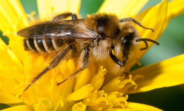 Bee Venom Kills HIV Nanoparticles Carrying Toxin Shown To Destroy Human Immunodeficiency Virus