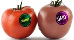 Brand new GMO food can rewire your body: more evil coming