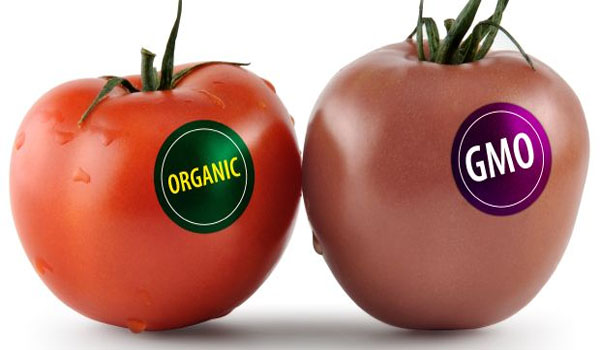Brand new GMO food can rewire your body more evil coming