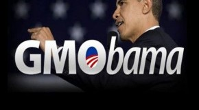 Obama sells out U.S. citizens yet again by signing the &#8216;Monsanto Protection Act&#8217; into law