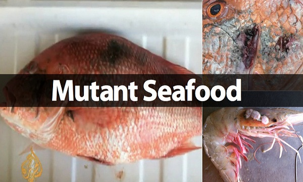 The 'Horribly Mutated' Seafood in The Gulf of Mexico