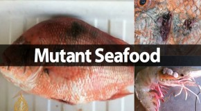 The Horribly Mutated Seafood in The Gulf of Mexico