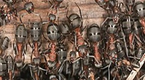 Can Ants Predict When an Earthquake Will Strike?