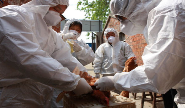 China Premier Asks to Stay on High Alert on H7N9 Bird Flu