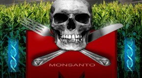 Even the NY Times is now rejecting Monsanto GMO science