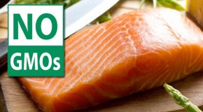 Oregon set to ban GM salmon and mandate GMO labeling