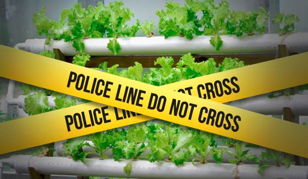 Police stake out hydroponics shops, harass customers who grow their own food