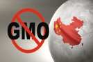 Breaking News: China Destroys 3 US Shipments of GM Corn