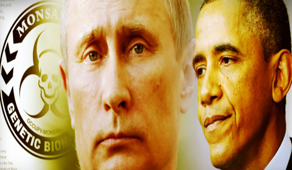 "Russia Warns Obama Global War Over ""Bee Apocalypse"" Coming Very Soon"