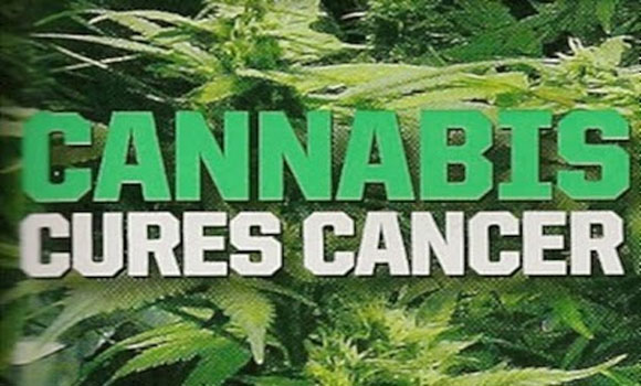 There Is No Mistaking The Evidence, Cannabis Cures Cancer