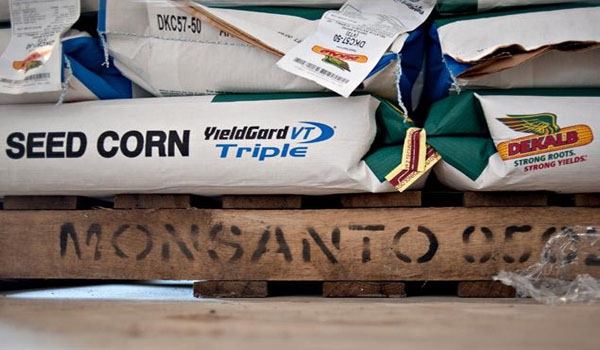 Monsanto sued by Kansas farmer over GMO wheat discovery that's hurt US exports