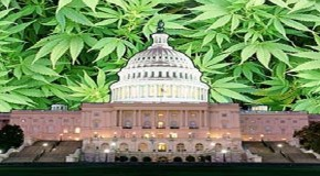 U.S.: House Passes Amendment Protecting State Rights To Grow Hemp For Research