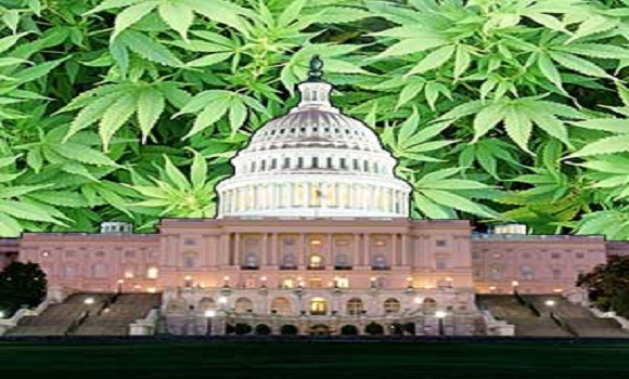 U.S House Passes Amendment Protecting State Rights To Grow Hemp For Research