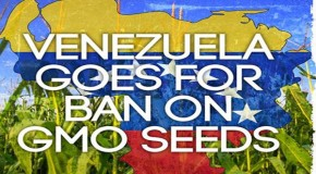 Venezuela Goes for Ban on GM Seeds