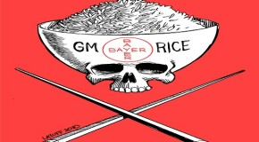 Genetic rice lawsuit in St. Louis settled for $750 million