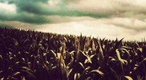 Italy Moves To Ban Monsanto GMO Corn
