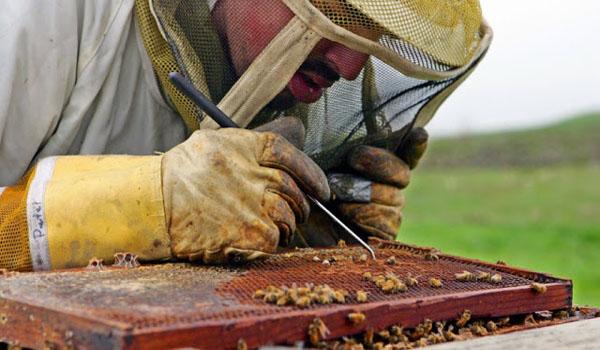 Cientistas descobrem o que está matando as abelhas e é pior do que você pensou