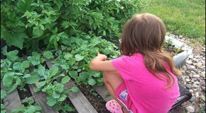 4 Year Old Girl's Vegetable Garden Must Go, Says USDA