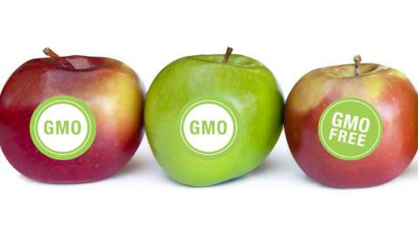Breakdown of GMO Labeling Laws in Each Country (Global Map)