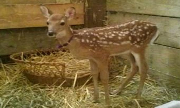 Wisconsin Commando team raids shelter to kill Al Qaeda fawn