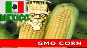 Bombshell: Mexico Bans GMO Corn