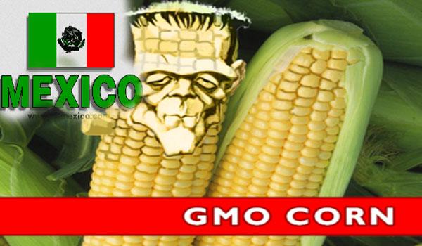 Bombshell Mexico Bans GMO Corn