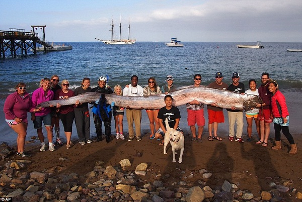 Radiation 3 Rare 'Sea Monsters' Wash Up In SoCal