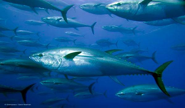Radioactive Bluefin Tuna Caught Off California Coast