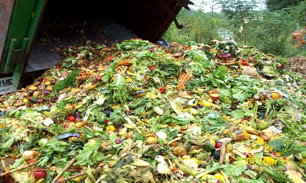 Tesco vows to act after study confirms huge food waste