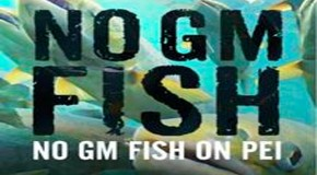 Canada Approves GM Fish Eggs, Environmental Threat