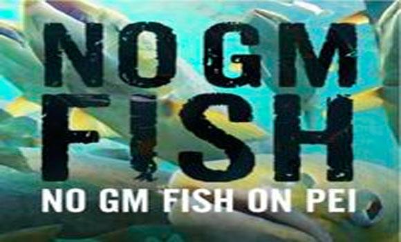 Canada Approves GM Fish Eggs, Environmental Threat