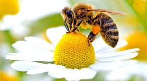 Scientists Discover Another Cause of Bee Deaths, and it's Really Bad News‏
