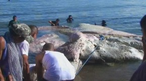 Video: Giant Sea Creature Baffles Experts After Washing Up On Shore